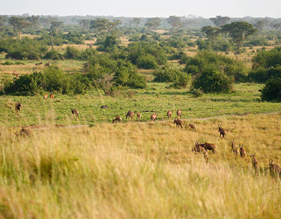 what to see at Queen Elizabeth national park
