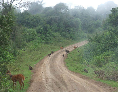 holiday ideas kenya,Aberdares national park