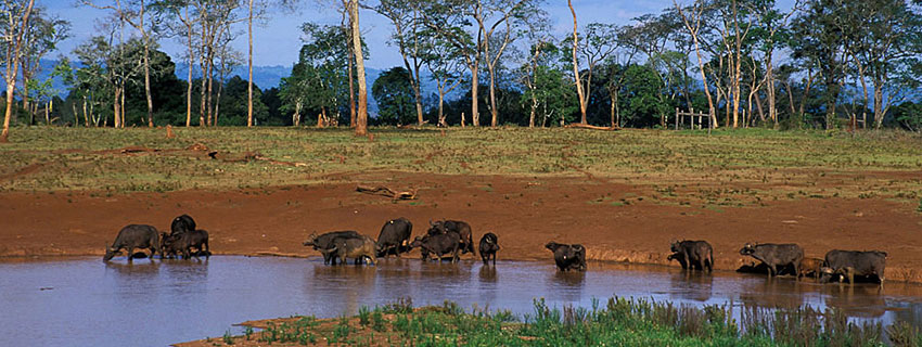 safari destinations in Kenya, Aberdares national park