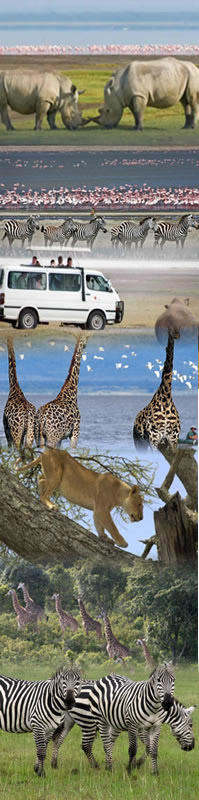 Lake Nakuru National Park safari Holidays