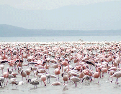 What to see in Lake Nakuru