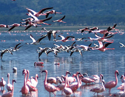 holiday ideas kenya, Lake Nakuru