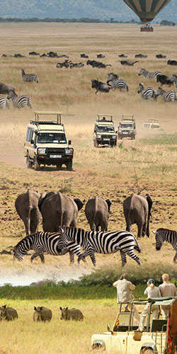 Safari Holidays in Africa