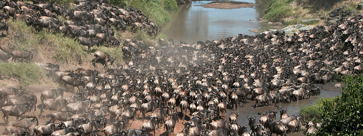 The Great Migration in Africa