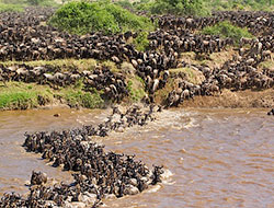 Africa Great Migration photography tour